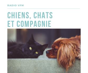 Chiens Chats et compagnie du 09-09-2020 - 14H02
